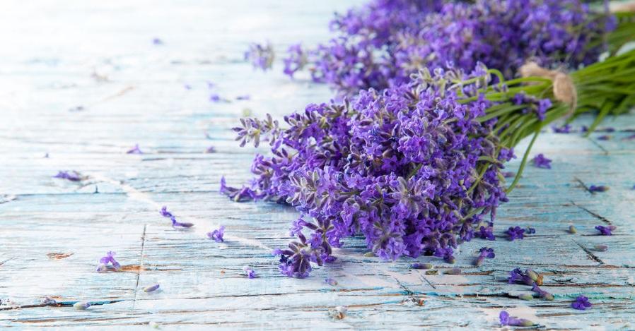 精油やドライフラワーで楽しもう♪ <br />初夏の花、ラベンダーの効能や使い方一覧画像