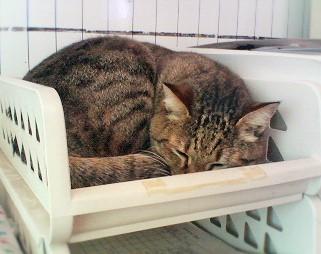 書類入れで丸くなる猫
