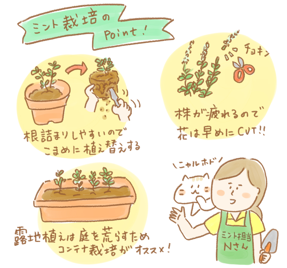 ミント栽培のコツ