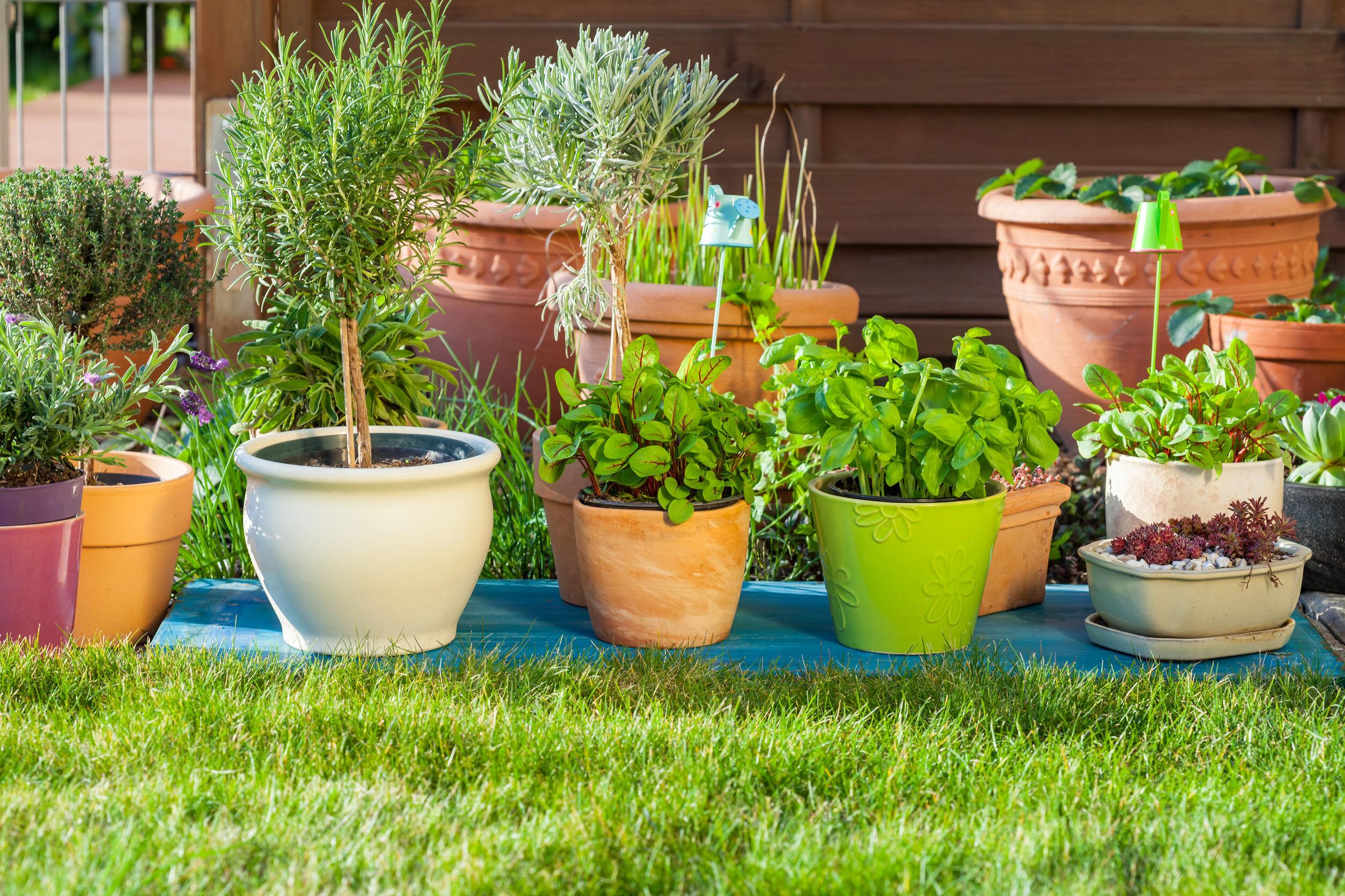 庭に並ぶ植木鉢