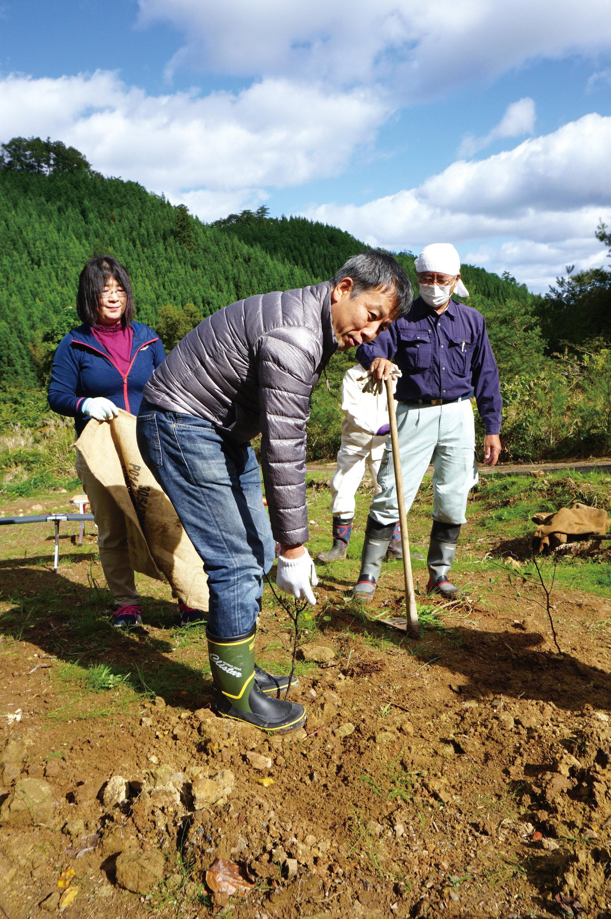 苗を植えた後、土を踏み固める和ハーブ協会 古谷暢基理事長.jpg