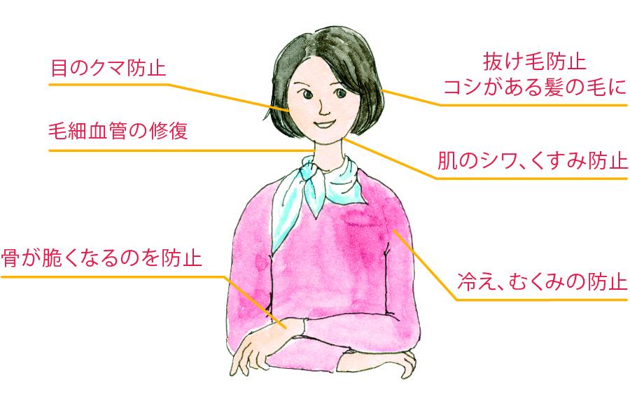 シナモンの効能の説明イラスト