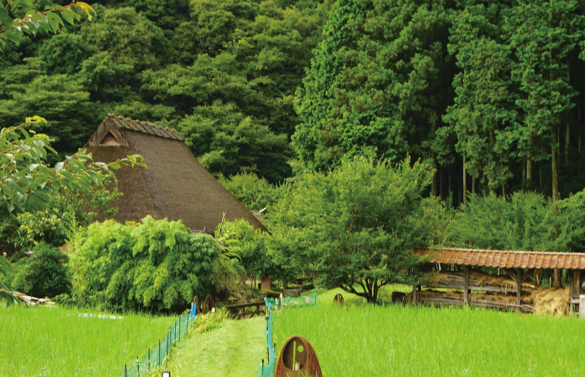 島根県が特産品として期待する和のハーブ「クロモジ」