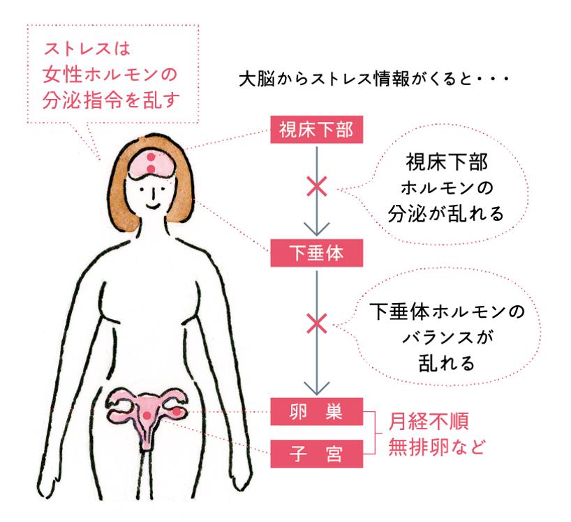 ストレスと女性ホルモンの図
