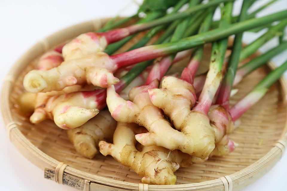 葉生姜の写真