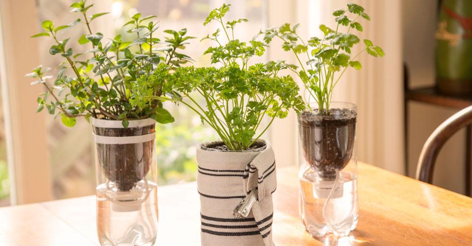 室内で簡単にハーブ栽培!育てたハーブの活用法も紹介