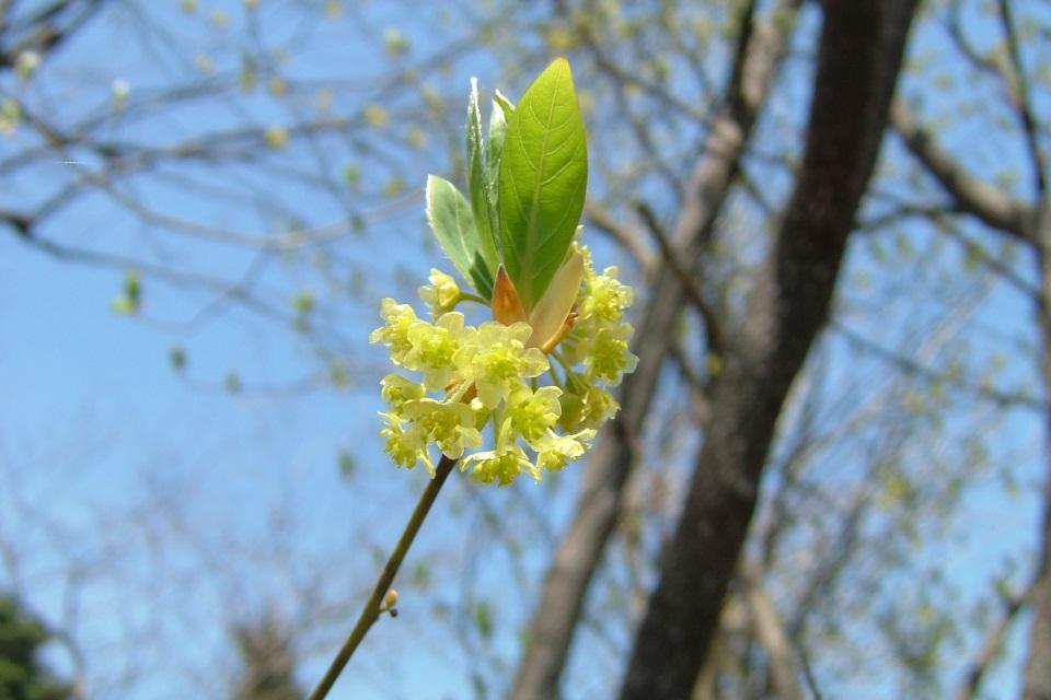 kuromoji-flower.jpg