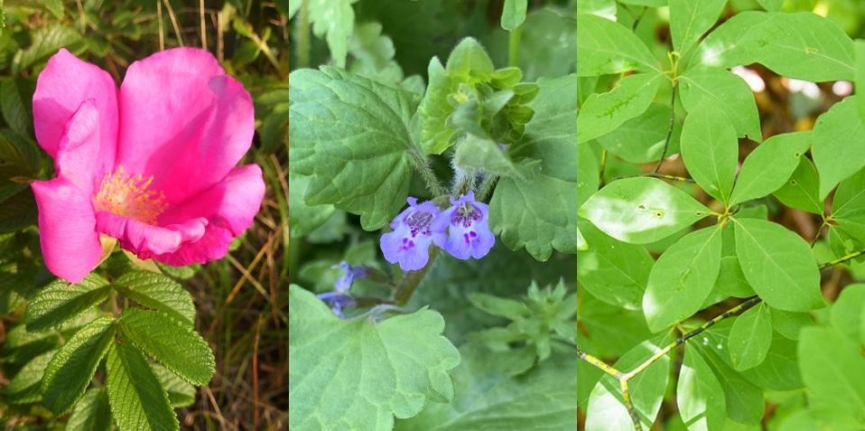 【和ハーブ連載】植物は丸ごといただく!人と植物の関係と活用法一覧画像