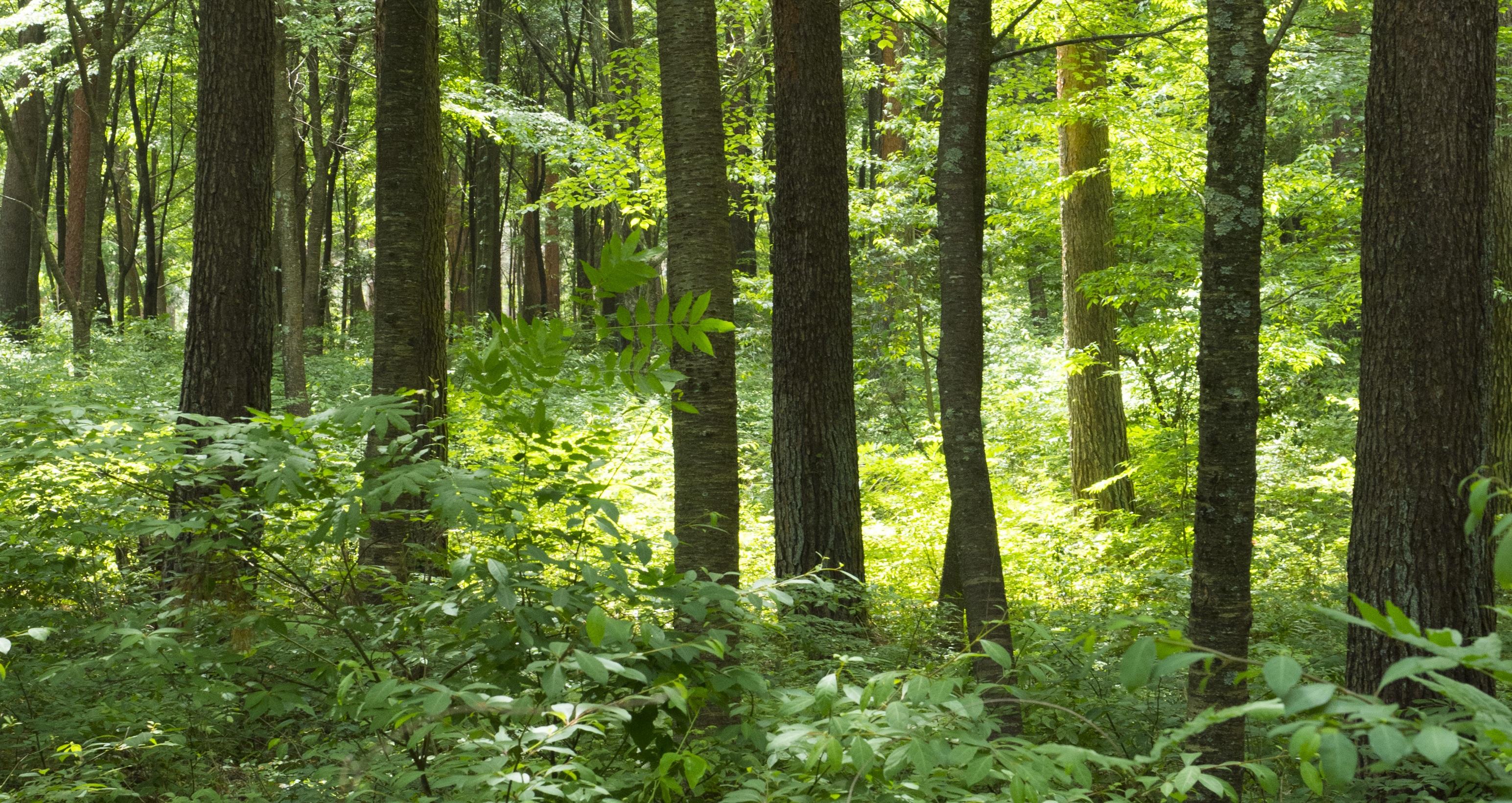 東大名誉教授にきく、森林浴の効果!香りのメカニズムと注目の効能一覧画像