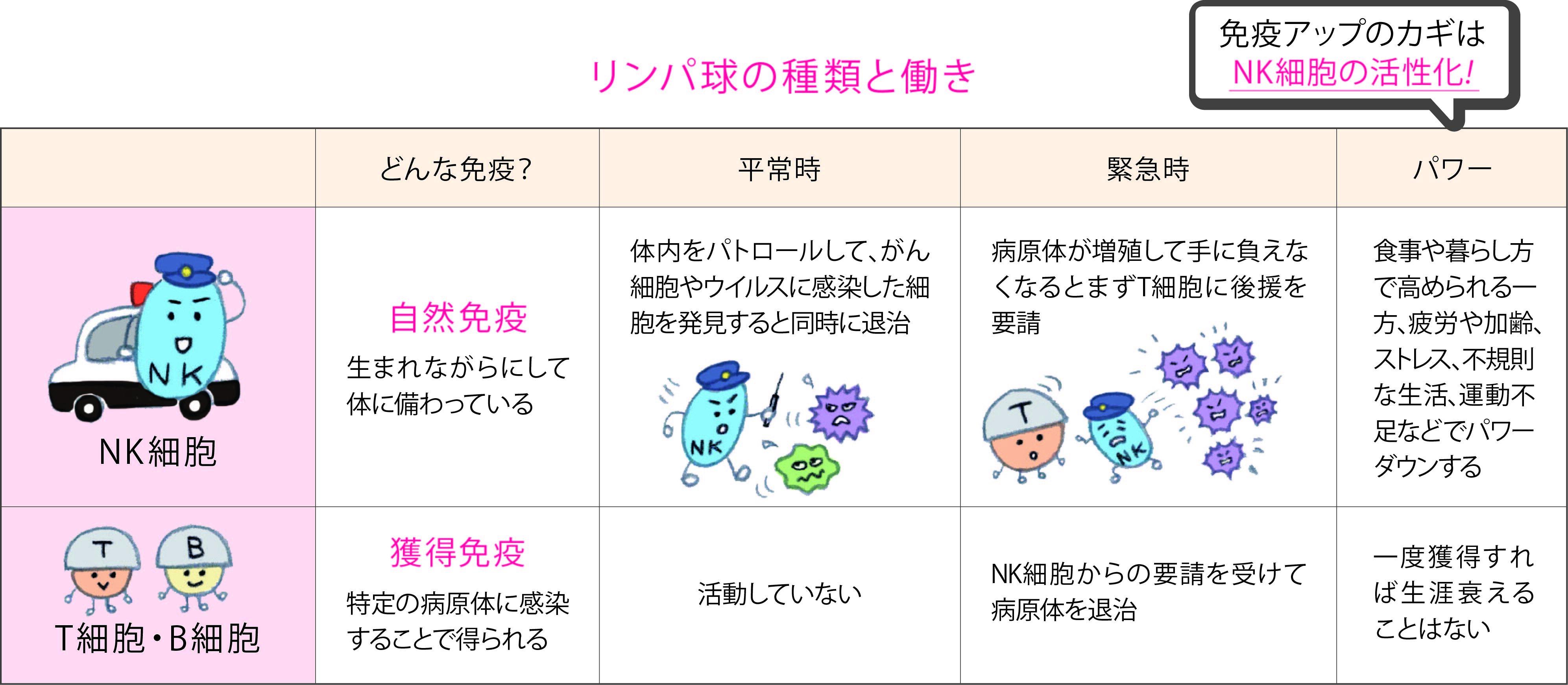 リンパ球の種類と働き一覧
