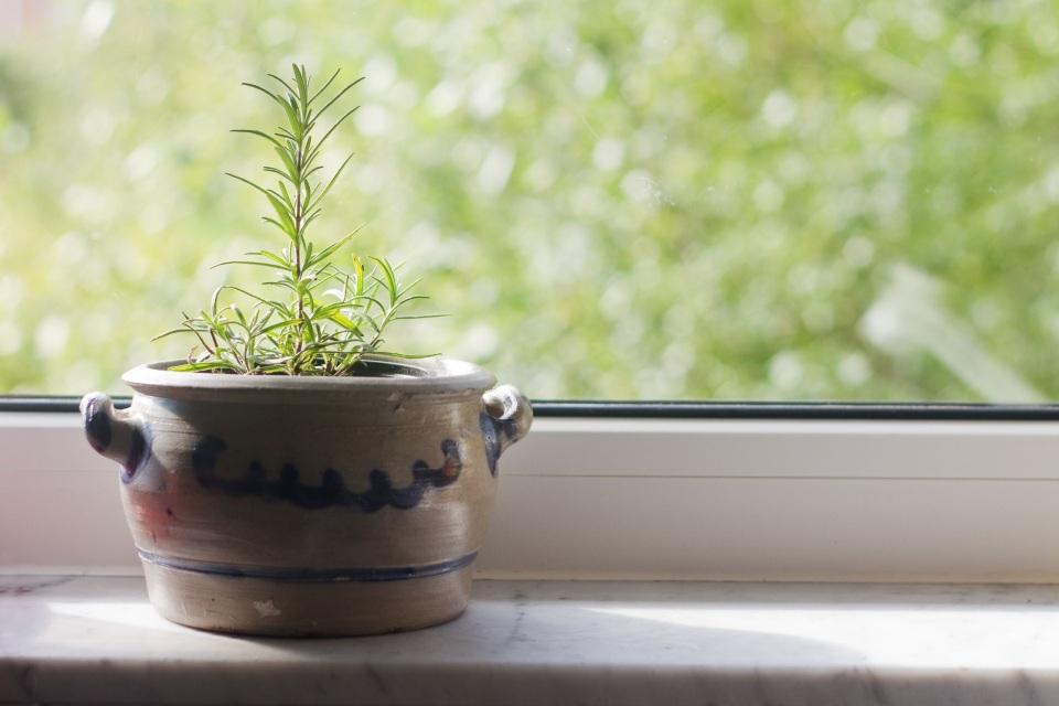 rosemary-pot.jpg