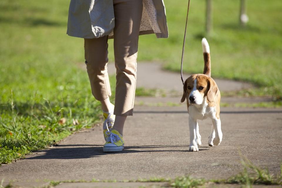 犬と歩く人